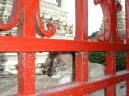 2804570-Siamese_cat_Bangkok