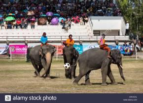 Elephant Soccer in Surin