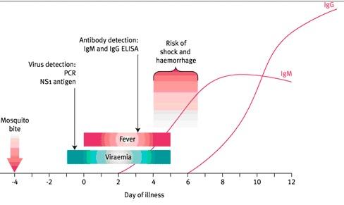 dengue timeline