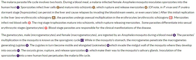 malaria-lifecycle-legend