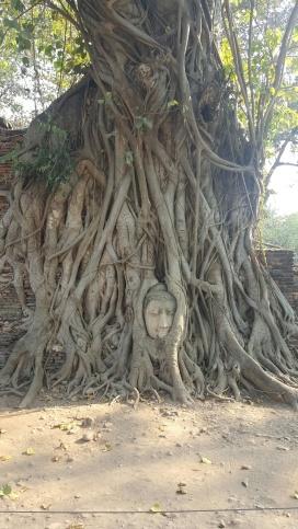 ayutthaya_terisa6