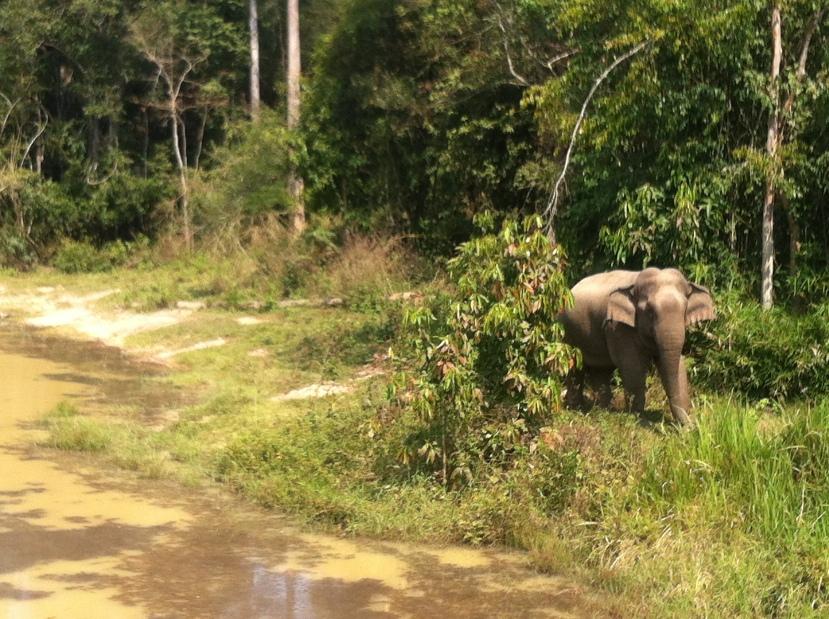 Kaeng Krachan NP-elephant