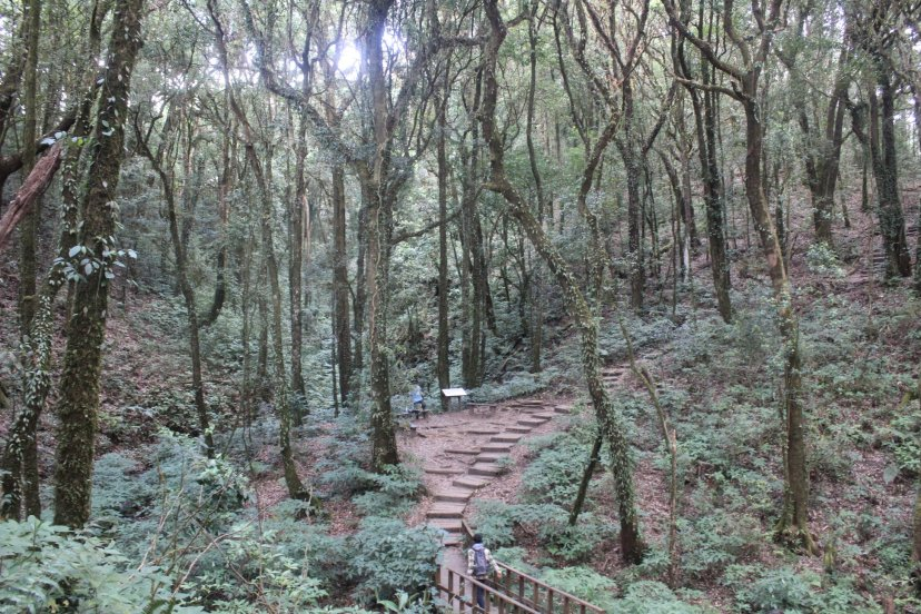 doi inthanon kew trail